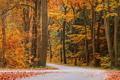 The Autumn Road Art Print by Martin Bergsma
