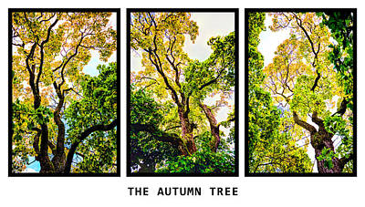 The Autumn Tree Art Print by Tommytechno Sweden