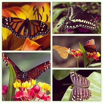 Animals Wall Art - Photograph - Butterfly Garden by Heidi Hermes