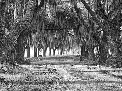 Photograph - The Avenue Of Oaks by Scott Hansen