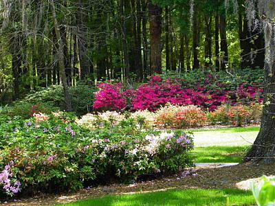 Photograph - The Azaleas Of Sholom Park by Judy Wanamaker