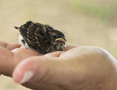 Art Print featuring the photograph The Baby Wren Can't Fly by B Wayne Mullins