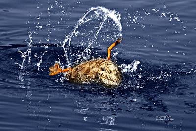 Photograph - The Backstroke - Mallard by James Ahn