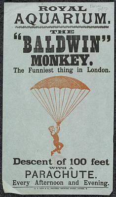 Unusual Animal Photograph - The Baldwin Monkey by British Library