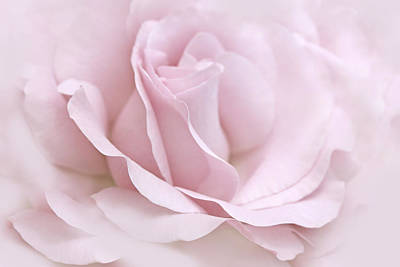 Photograph - The Ballerina Pink Rose Flower by Jennie Marie Schell