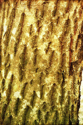 Photograph - The Bark Of A Tree by Photography  By Sai
