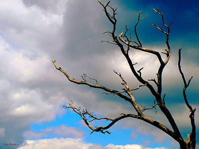 Photograph - The Barren Tree by Tyler Robbins