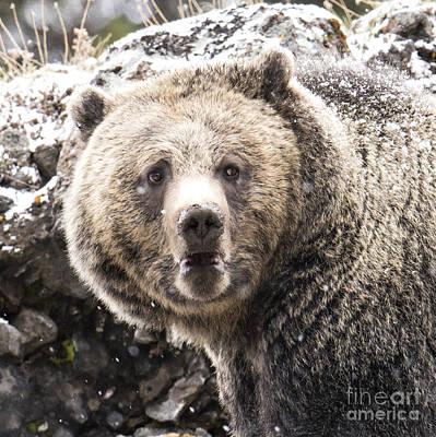 The Bathroom Bear Original by Deby Dixon