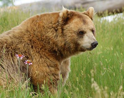 Digital Art - The Bear Dry Brushed by Ernie Echols