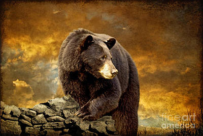 Cabin Wall Photograph - The Bear Went Over The Mountain by Lois Bryan