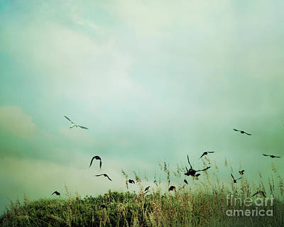 Photograph - The Beautiful Flight by Sharon Coty