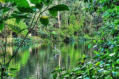 The Beautiful Greens Of Nature Print by Kaye Menner