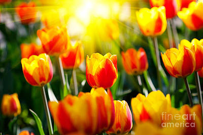 Tulips Online Photograph - The Beautiful Tulips by Boon Mee