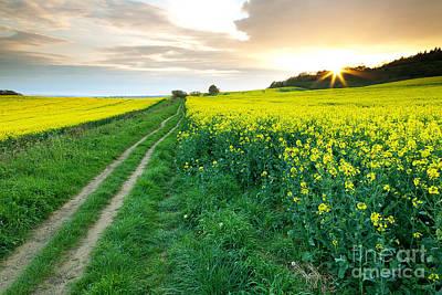 The Beautiful Yellow Rapeseed Field Art Print by Boon Mee