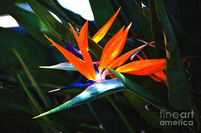 Yellow Bird Of Paradise Photograph - The Beauty Of A Bird Of Paradise by Susanne Van Hulst