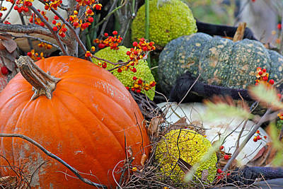 Becky Falls Photograph - The Beauty Of Autumn by Becky Lodes