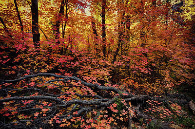 The Beauty Of Autumn  Art Print by Saija  Lehtonen
