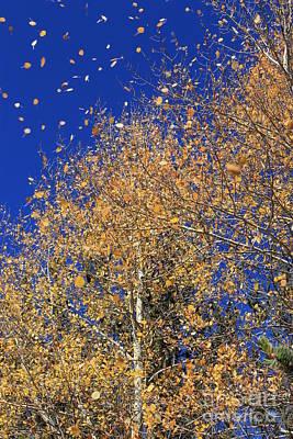 Thomas Kinkade - The Beauty of Fall by Tonya Hance
