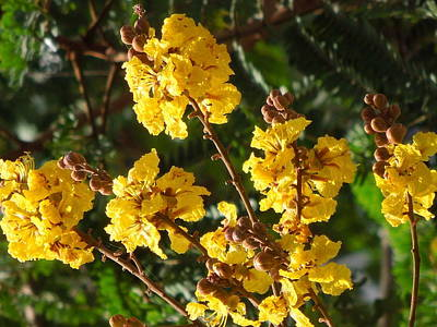 The Beauty Of Flowers Original by Prakash Leuva