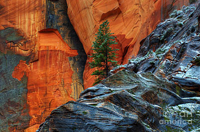 The Beauty Of Sandstone Zion Art Print by Bob Christopher