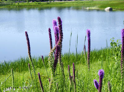 Art Print featuring the photograph The Beauty Of The Liatris by Verana Stark