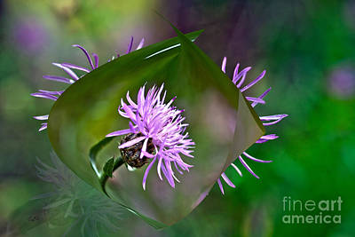 Photograph - The Beauty Within by Crystal Harman