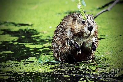 Photograph - The Beaver With The Attitude by Elizabeth Winter