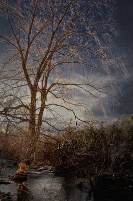 Photograph - The Beaver's Tree by Steven Mancinelli