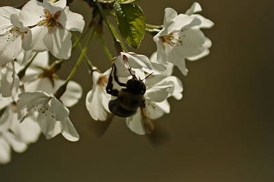 Photograph - The Bee by Debra Crank