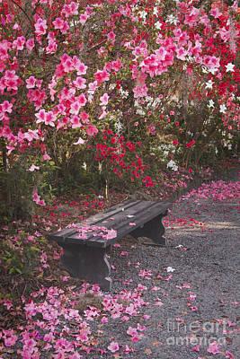 The Bench Original by Maria  Struss