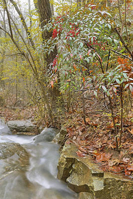 Photograph - The Berries Of Dogtown Falls - Arkansas - Waterfall by Jason Politte