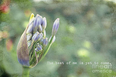 Photograph - The Best Of Me by Diane Enright