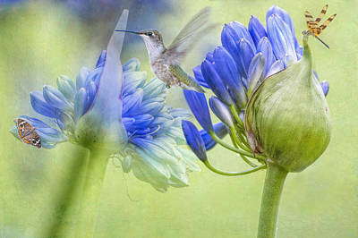 Agapanthus Photograph - The Best Way To Keep Love Is To Give It Wings by Bonnie Barry