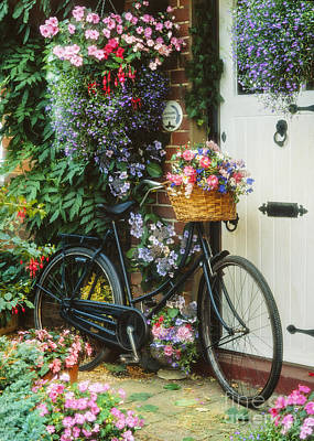Hanging Baskets Photograph - The Bicycle At Lavender Cottage by MGL Meiklejohn Graphics Licensing