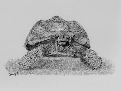 Giant Tortoise Drawing - The Big Brute by Wendy Brunell