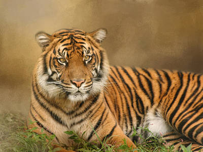 Photograph - The Big Cat by Kim Hojnacki