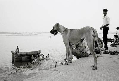 Absurdity Photograph - The Big Dog by Shaun Higson