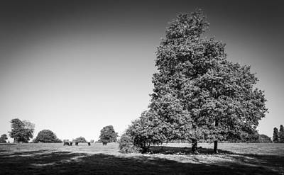 Photograph - The Big Tree by Gary Gillette