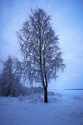 Photograph - The Birch On The Shore by Jouko Lehto