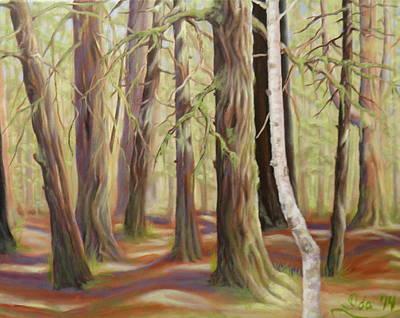The Birch Tree Art Print
