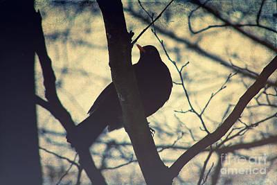 Blackbird Mixed Media - The Bird by Angela Doelling AD DESIGN Photo and PhotoArt