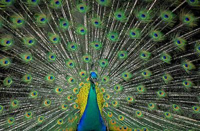 The Bird Of A Thousand Eyes Art Print