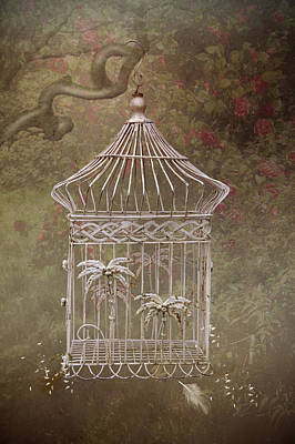 Photograph - The Birdcage by Ethiriel  Photography