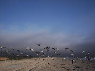 Photograph - The Birds by Donna Blackhall