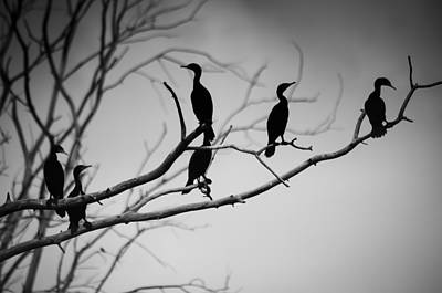 Photograph - The Birds by Eric Miller