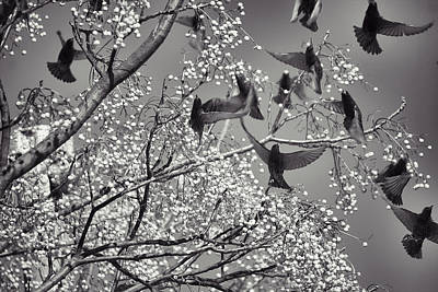 Photograph - The Birds by Jason Politte