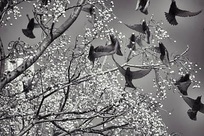 Photograph - The Birds by Jason Politte