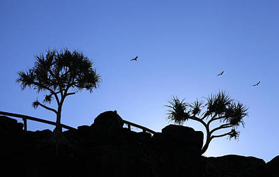Photograph - The Birds by Noel Elliot