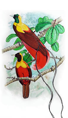 Painting - The Birds Of Paradise by Mayur Sharma