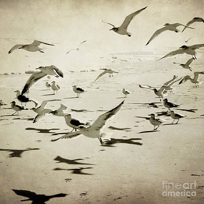 Photograph - The Birds by Sharon Kalstek-Coty